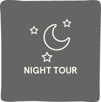 Night Tours